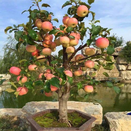 Ovocné dreviny